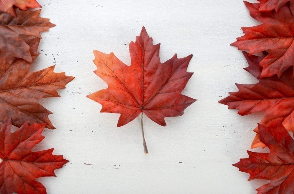 red silk leaves in shape of Canadian Flag.